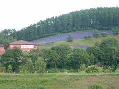 7-22ワイン工場