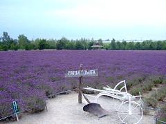 08-04ファーム富田