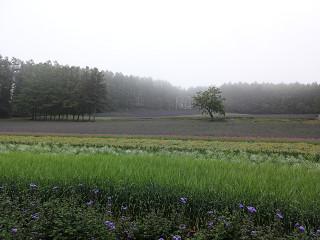 ファーム富田・彩りの畑(2012年7月6日)
