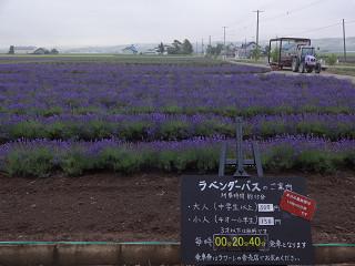 ファーム富田・ラベンダーイースト(2012年7月6日)