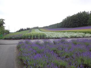 ファーム富田・彩りの畑(2012年7月13日)