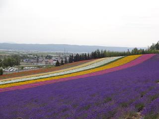ファーム富田・彩りの畑(2012年7月27日)