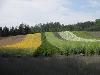 ファーム富田・彩りの畑(2013年7月12日)