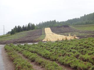 ファーム富田・彩りの畑(2013年8月9日)