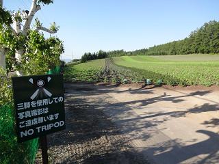 ファーム富田・彩りの畑(2014年6月27日)