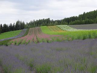 ファーム富田・彩りの畑(2014年7月4日)