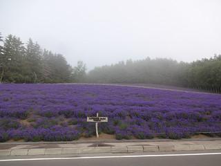 ファーム富田・トラディショナル(2014年7月11日)