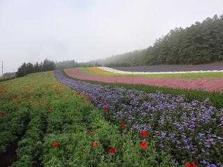 ファーム富田・彩りの畑(2014年7月11日)