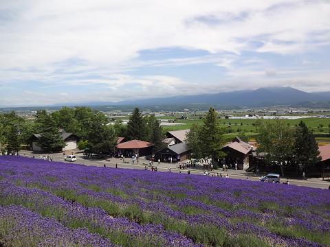 ファーム富田・トラディショナルラベンダー畑(2016年7月15日)