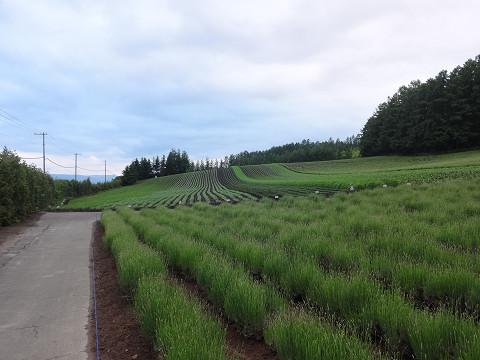 ファーム富田・彩りの畑(2017年6月23日)