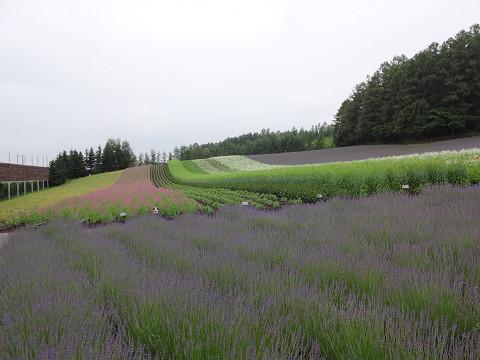 彩りの畑(2018年7月13日)